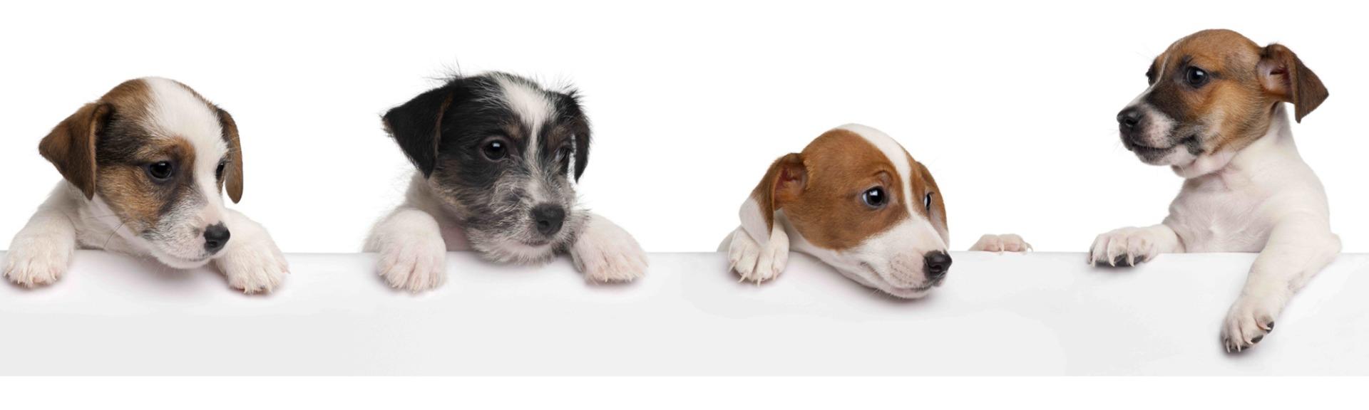 Pet cagnolini